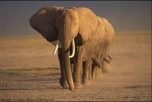 Elefantes 1