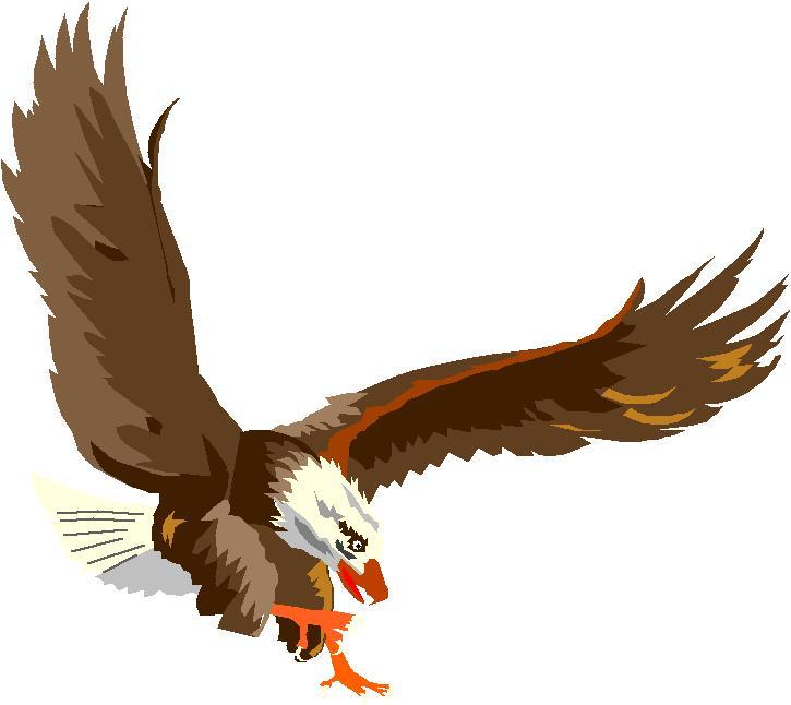 Águilas pescadoras   Reflexiones Diarias