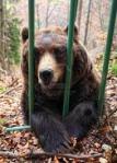oso en jaula